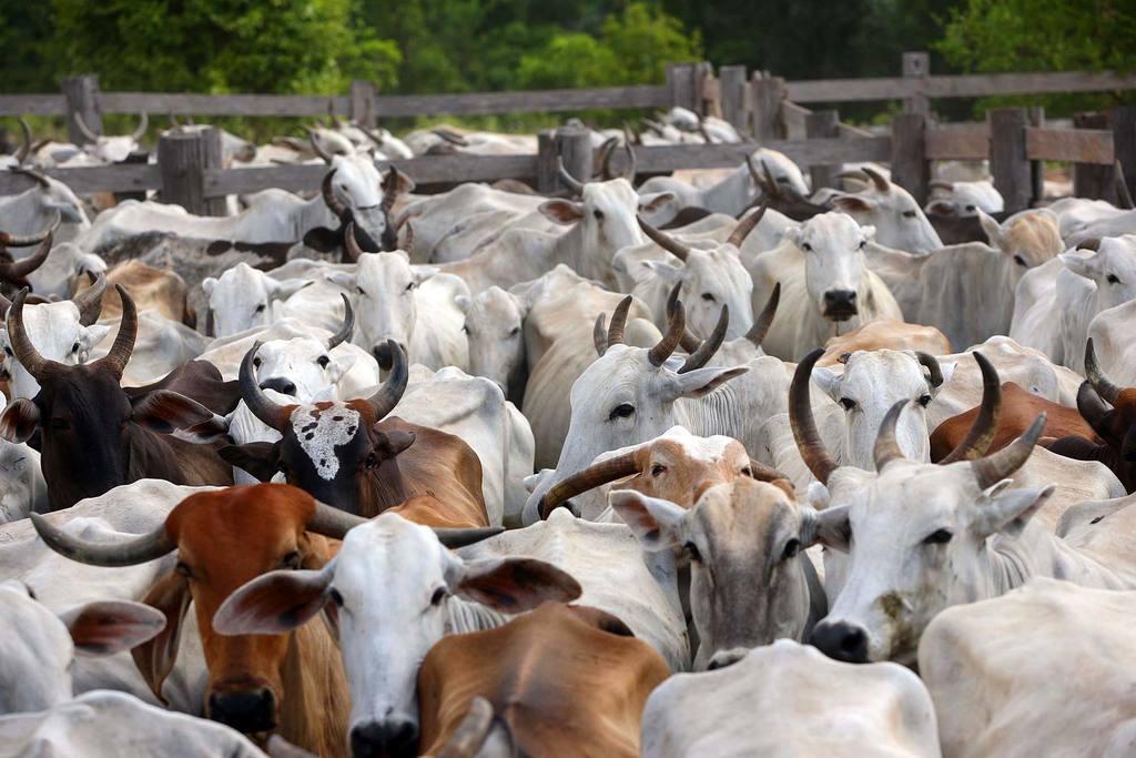 Resultado de imagem para Mercado do boi