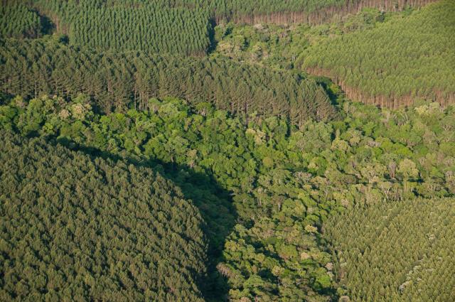 CAR, licenciamento ambiental, meio ambiente, floresta