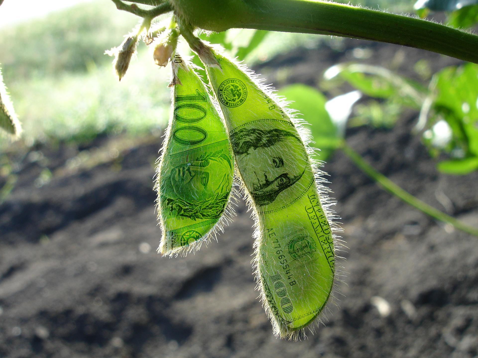 soja estampada com dólar e real