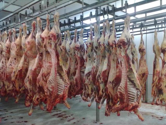frigorífico, preço da carne bovina