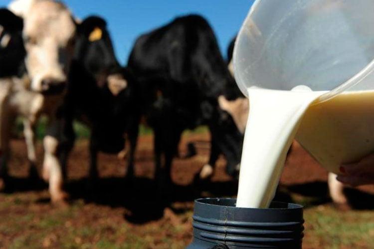 leite de vaca, fazendas leiteiras